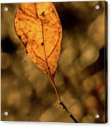 A Single Leaf In The Late Sun Acrylic Print