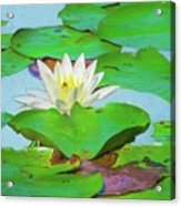 A Single Water Lily Blossom Acrylic Print