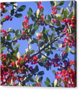 A Sky Full Of Holly Acrylic Print