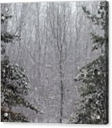 A Snowy Day In The Woods Acrylic Print