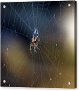 A Spider And Her Web Acrylic Print