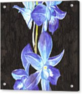 A Spray Of Orchids Acrylic Print