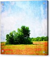 A Spring Day In Texas Acrylic Print