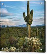 A Spring Evening In The Sonoran  Acrylic Print
