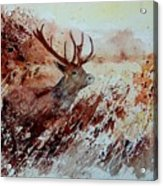 A Stag Acrylic Print
