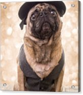 A Star Is Born - Dog Groom Acrylic Print by Edward Fielding