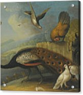 A Still Life With A Peacock, Pigeons And Chickens In A River Landscape Acrylic Print