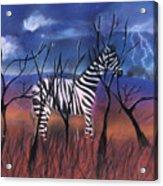 A Stormy Night For A Zebra  Acrylic Print