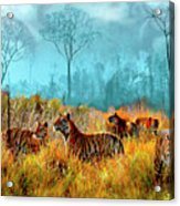 A Streak Of Tigers Acrylic Print