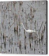 A Stroll Through The Marsh Acrylic Print