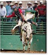 A Strong Bull Ride Acrylic Print