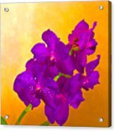 A Study In Orchid Acrylic Print