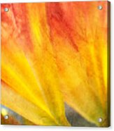 A Study In Red And Yellow Acrylic Print