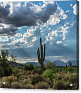 A Summer Day In The Sonoran  Acrylic Print