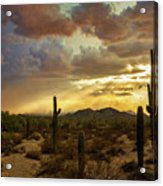 A Summer Evening In The Sonoran  Acrylic Print