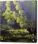 A Sunny Meadow Acrylic Print