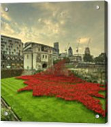 A Sweep Of Poppies  Acrylic Print