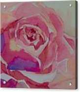 A Tale Of A Rose  Acrylic Print