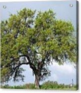 A Tale Of One Tree Acrylic Print