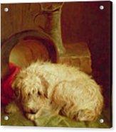 A Terrier Acrylic Print