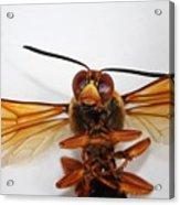 A Thug Bug Acrylic Print