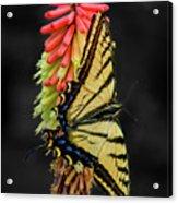 A Tiger On A Poker Acrylic Print