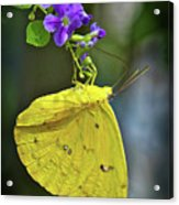 A Touch Of Beauty Acrylic Print
