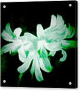 A Touch Of Green On The Lilies Acrylic Print