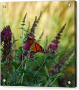 A Touch Of Orange Acrylic Print