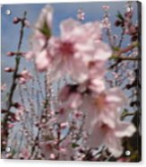 A Touch Of Pink 4 Acrylic Print by Susanne Awbrey