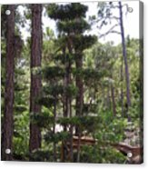 A Towering Tree Acrylic Print
