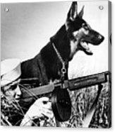 A Trained German Shepherd Sitting Watch Acrylic Print by Everett