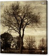 A Tree Along The Roadside Acrylic Print
