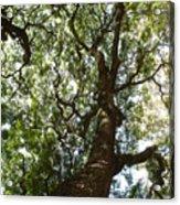 A Tree Acrylic Print