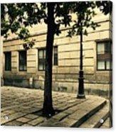 A Tree Grows In Barcelona Acrylic Print