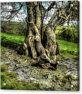A Tree In A Pool Of Light Acrylic Print