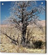 A Tree In The Dry Land Color Acrylic Print