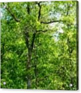 A Tree In The Woods At The Hacienda  Acrylic Print by David Lane