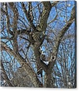 A Tree In Winter- Vertical Acrylic Print