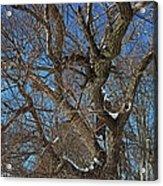A Tree In Winter- Horizontal Acrylic Print