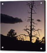 A Tree Is Silhouetted By The Setting Acrylic Print
