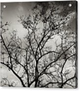 A Tree Laid Bare Acrylic Print