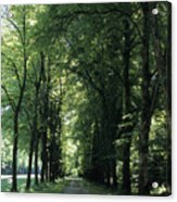 A Tree Lined Path Leads To Mad King Acrylic Print