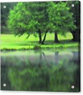 A Tree Reflected Acrylic Print