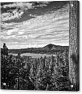 A Tree Stands Guard Over Big Bear Lake Acrylic Print