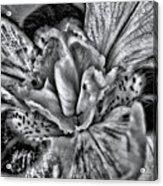 A Tribute To Georgia O'keeffe Acrylic Print