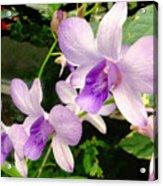 A Trio Of Pale Purple Orchids Acrylic Print