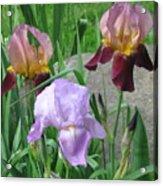 A Trios Of Irises Acrylic Print