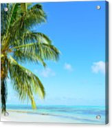 A Tropical Palm Tree Beach Acrylic Print