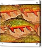A Trout Lovers Dream Acrylic Print by Terry Mulligan